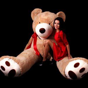 teddy-260-2