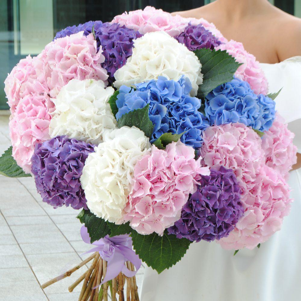 Hydrangea WOW